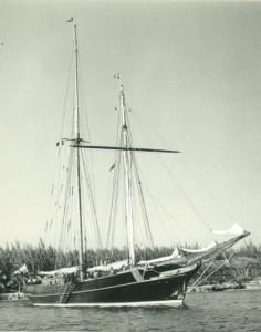 Coradina - 17