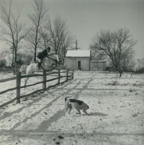 fox hunting - 1